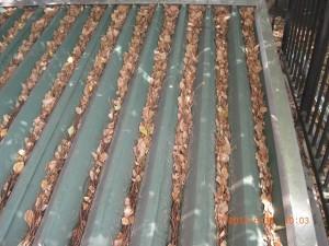 倉庫屋根には落ち葉が溜まってしまっています