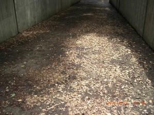 地下へ続くスロープ面に溜まった落ち葉。これらが側溝のつまりの原因となります。