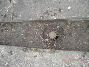 雑草やゴミ泥を清掃することで雨水の流れが良くなります。