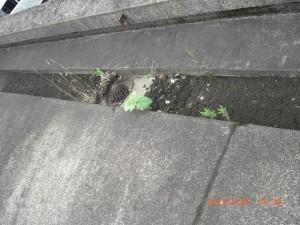 泥や雑草の生えてしまった側溝