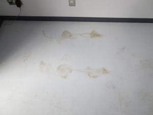研究所床にはこんなシミがありました